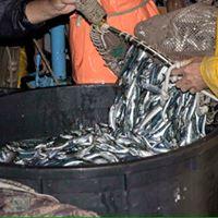 Pesca al bolentino o a traina